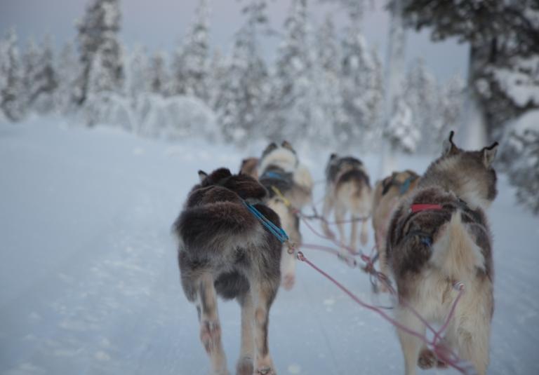 husky-sled-riding-2